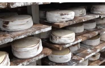 Le retour d'une star de nos plateaux de fromages : le Mont d'Or.